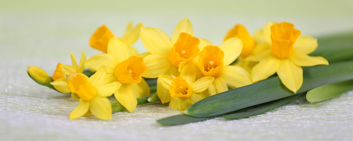 Easter Articles