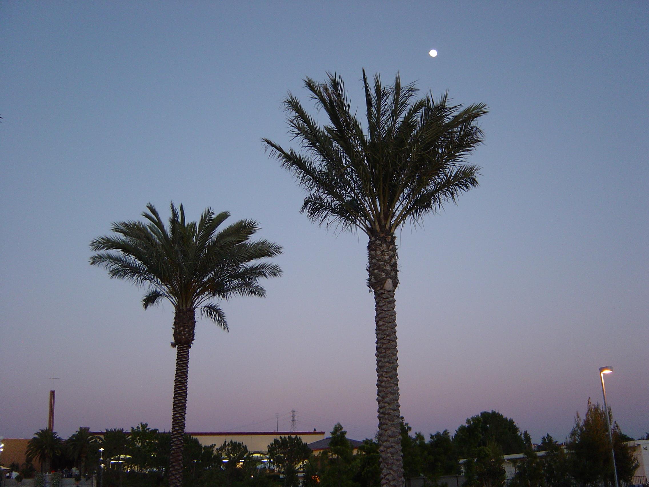Illustrasjon palme04