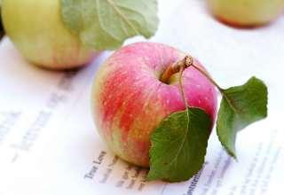truelove apple