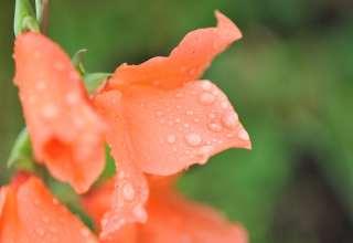 blomst vann1