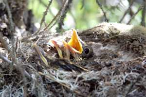 fugl barn