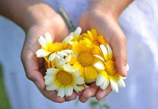 hender-blomst78