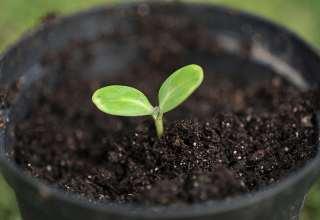 potte-plante3