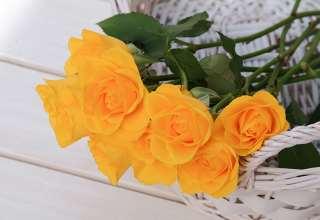 gule roser i hvit kurv