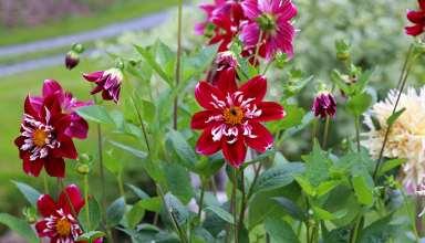 blomst58-1