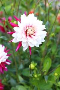 blomst108