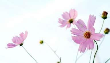 blomst2-1